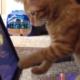 Cat playing fruit ninja